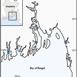 (PDF) Fishery biology of gangetic whiting Sillaginopsis