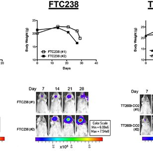 Morphologies and gene expression analysis of human FTC