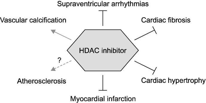 The therapeutic potential of HDAC inhibitors in