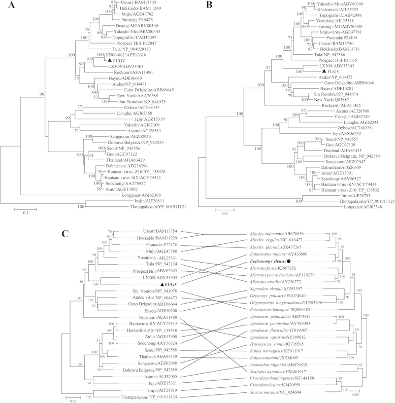 Phylogenetic analysis of hantaviruses and their hosts based on the ...