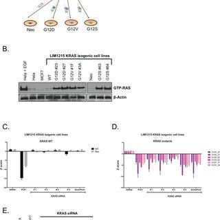 Effects of CDK1 depletion in non-isogenic KRAS mutant cell