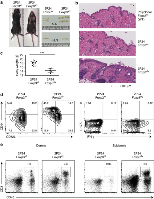 small resolution of 2p24 treg tcr recognizes an antigen expressed in the skin a focal alopecia