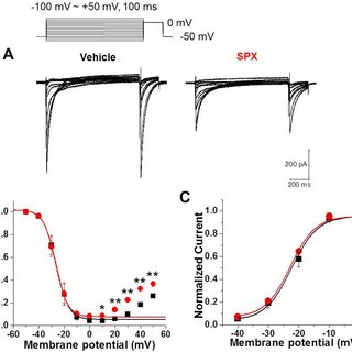 (PDF) Impaired Inactivation of L-Type Ca2+ Current as a