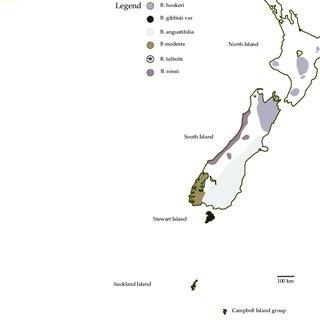 (PDF) A review of the genus Bulbinella (Asphodelaceae