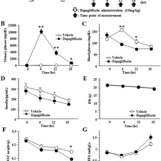 Dapagliflozin enhances hepatic gluconeogenesis and