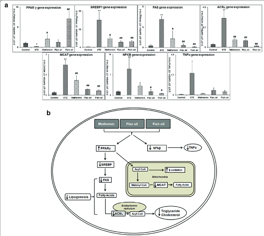 a Expression of genes involved in lipid metabolism and