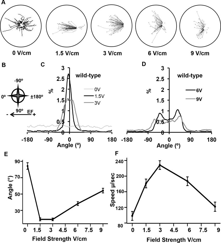 electrotaxis behavior in wild