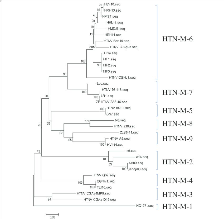 Phylogenetic tree (NJ) of hantaviruses based on partial M segment ...