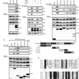 (PDF) Functional and Structural Mimicry of Cellular