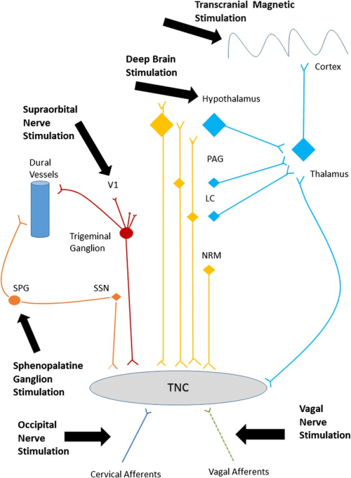 small resolution of headache pain pathways targeted by neurostimulation a simplified diagram of the various peripheral and central