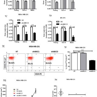 Knockdown of ABCC3 enhances doxorubicin retention in