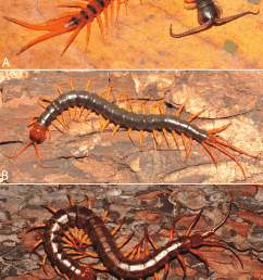 colouration changes and patterns during developmental stages of download scientific diagram [ 850 x 1276 Pixel ]