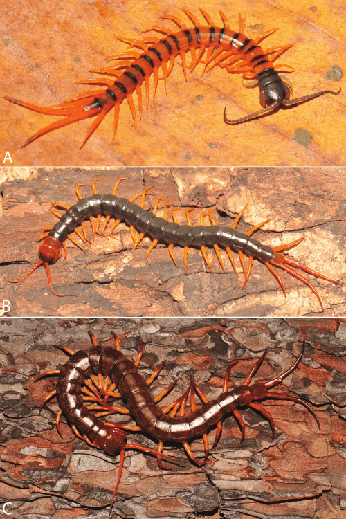 small resolution of colouration changes and patterns during developmental stages of download scientific diagram