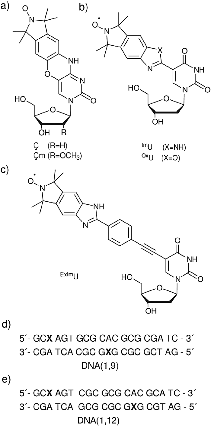 hight resolution of  a rigid spin labels and m b isoindoline derived spin labels im u and ox u c benzimidazoline spin label exim u d and e the sequence for dna 1