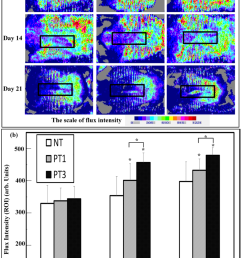 assessment of blood flow of wound was detected by laser doppler scanning a  [ 850 x 1257 Pixel ]