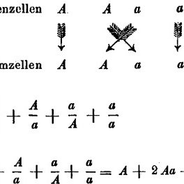(PDF) From Mendel to epigenetics: History of genetics