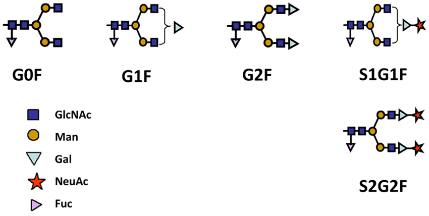 N-Glycan Structures. The N-glycan assay method quantifies
