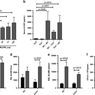 TLR2 agonist treatment leads to increased bone marrow