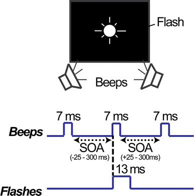 Task schematic for the double-flash illusion. Flashes (13