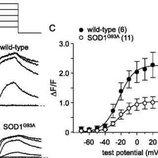 (PDF) Progressive impairment of CaV1.1 function in the