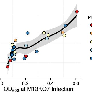 Culture density at time of helper phage infection predicts