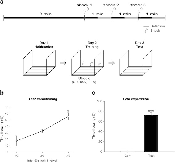 Fvb/n mice were exposed to contextual fear conditioning. a
