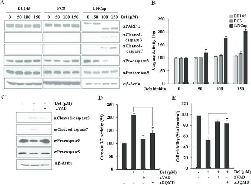Delphinidin induces caspase-dependent apoptosis in LNCaP