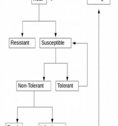 schematic diagram of host pathogen interactiondisease infection mode  [ 850 x 1073 Pixel ]