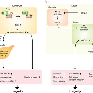 (PDF) The NAD World 2.0: the importance of the inter-tissue communication mediated by NAMPT/NAD+/SIRT1 in mammalian aging and longevity control