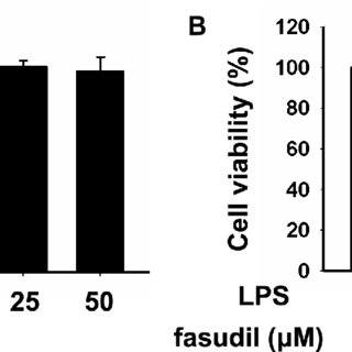 (PDF) Fasudil inhibits LPS-induced migration of retinal