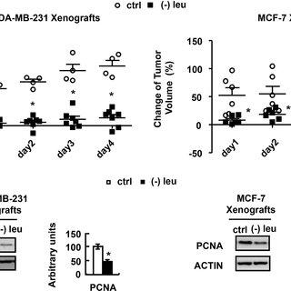 (PDF) Leucine deprivation inhibits proliferation and