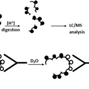 (PDF) Application of amide hydrogen/deuterium exchange