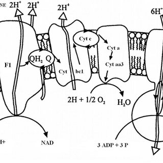 Diagram of the enzymatic oxidation of methane: F1