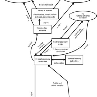 Information flow (bottom up) within the surveillance