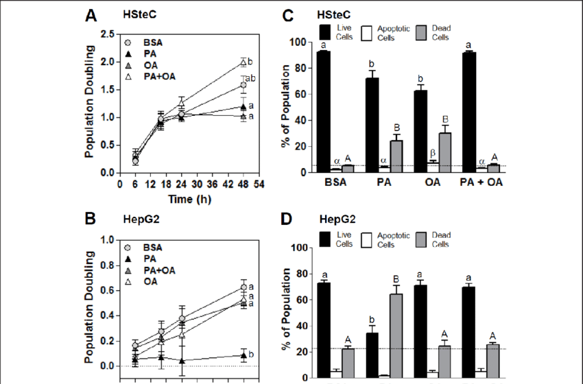 Cytotoxicity in primary human activated hepatic stellate