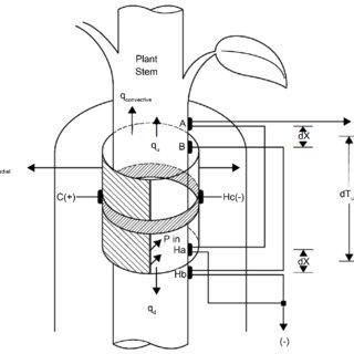 (PDF) The Stem Heat Balance Method to Measure