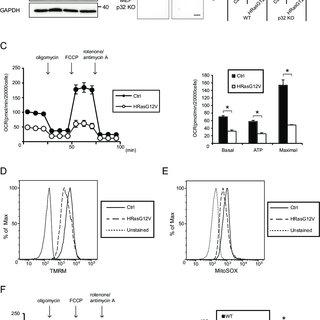 (PDF) Serum depletion induced cancer stem cell-like
