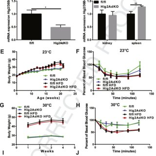 Effect of PM2.5 exposure on body and organ weights in KKay