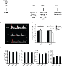 injection of idnk cells improves uterine artery blood flow a outline of in [ 850 x 952 Pixel ]