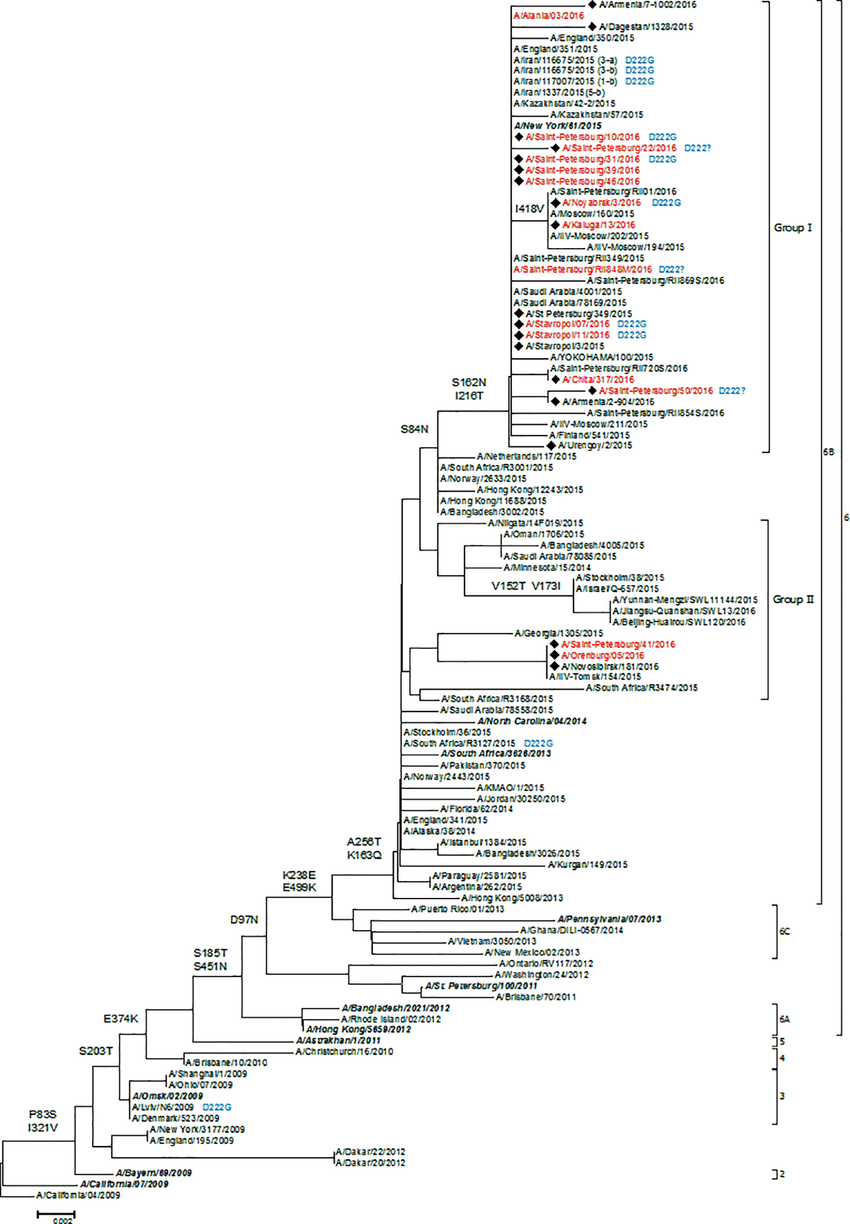 hight resolution of the phylogenetic tree of hemagglutinin protein of influenza download scientific diagram