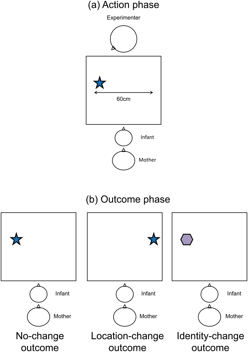 medium resolution of experimental set up for the action and outcome phases a experimenter made one of two object directed actions eye contact or no eye contact in action