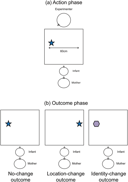 small resolution of experimental set up for the action and outcome phases a experimenter made one of two object directed actions eye contact or no eye contact in action