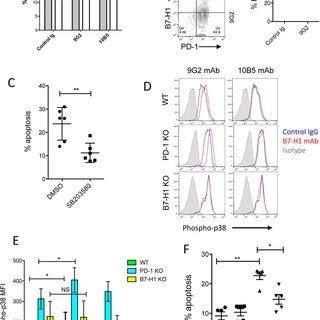 (PDF) B7-H1 antibodies lose antitumor activity due to