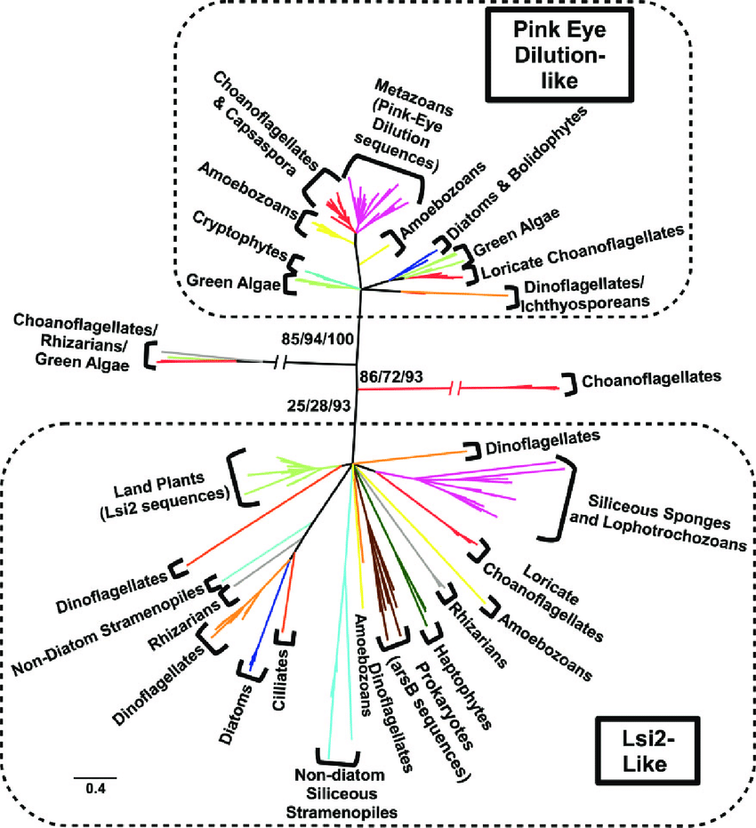 hight resolution of phylogenetic tree of lsi2 like sequences from a taxonomically diverse range of eukaryotes and prokaryotes