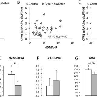 (PDF) Role of cannabinoid receptor 1 in human adipose