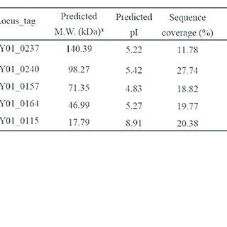 Bacterial challenge assay of phage HY01. (A) E. coli O157