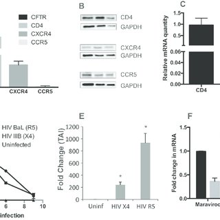 (PDF) HIV Infects Bronchial Epithelium and Suppresses