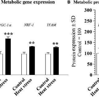 (PDF) Mitochondrial efficiency and exercise economy