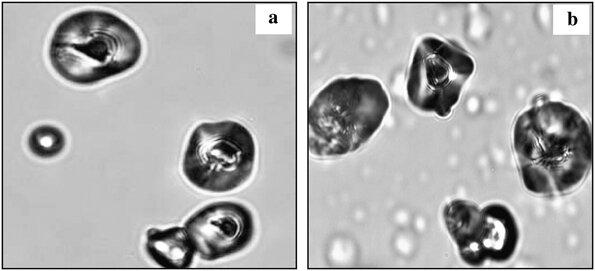 Confocal FT-Raman micrographs of. a native polysaccharide