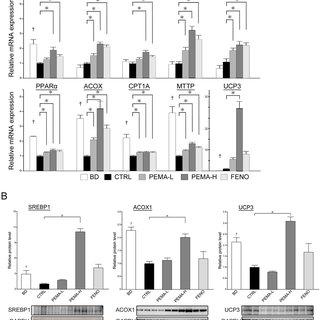 (PDF) Pemafibrate, a novel selective peroxisome